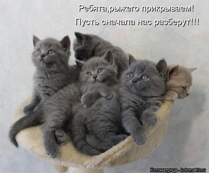 http://img.rufox.ru/files/624165.jpg