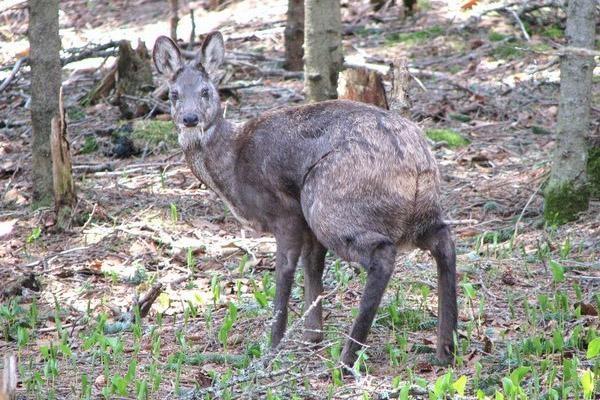 Д. Медведев утвердил перечень диких животных, занесенных в Красную ...