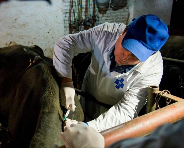 В Ростовской области стартовала массовая вакцинация сельскохозяйственных животных