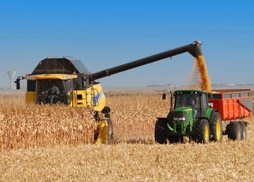 ВГрузии началась уборка урожая пшеницы