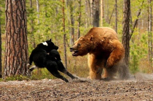 ВКрасноярском крае мужчина наохоте вместо медведя застрелил своего знакомого