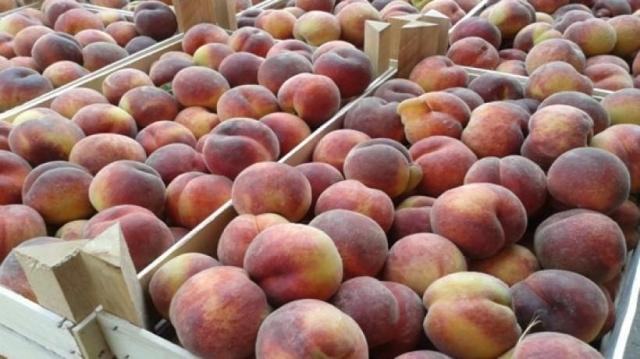 ВКраснодаре мужчина похитил персики икупил удочку