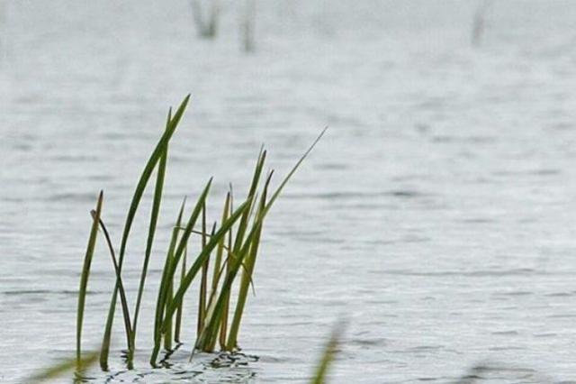 ВКрасноярском крае вреке Чулым потонул 11-летний ребенок