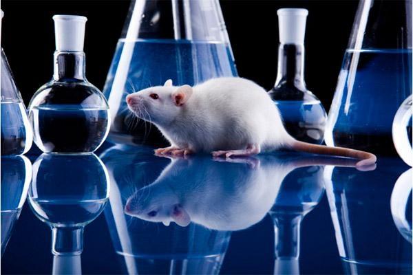 Неврологи: мыши чувствуют боль друг друга по запаху