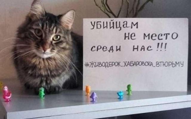 ВХабаровске прошёл пикет против сурового обращения сживотными