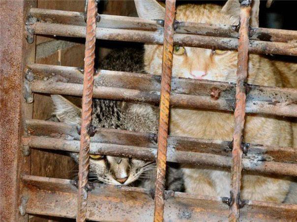 Кошек живьем замуровали вподвалах домов в столицеРФ