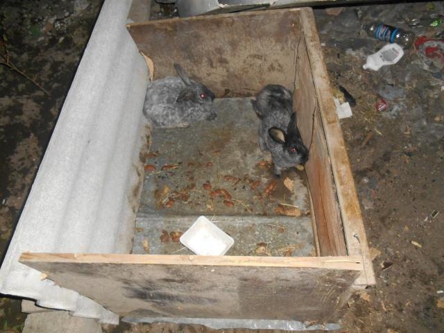 НаСтаврополье задержали пожирателя серебряных кроликов