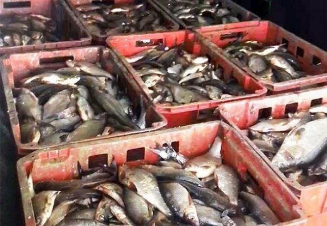ВМорозовском районеРО уничтожено 700кг рыбы сомнительного качества