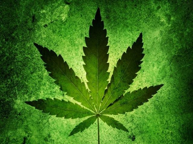 Вквартире краснодарца отыскали 16 кустов конопли ипартию марихуаны