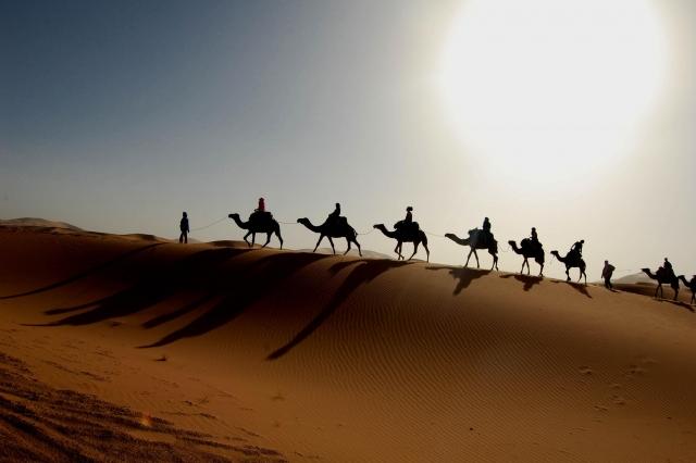 Через 100 лет пустыня Сахара превратится всаванну— Ученые
