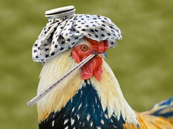 Около 2-х тонн зараженного вирусом птичьего гриппа мяса уничтожили вПриморье
