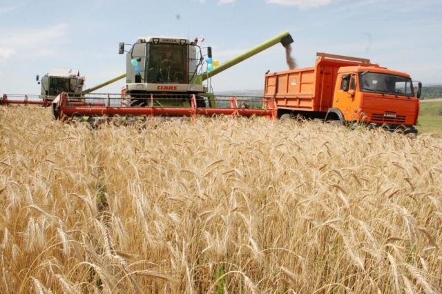 Негусто, однако все-таки: Воронежские аграрии намолотили 1-ый млн. тонн зерна