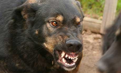 ВРостовской области зарегистрировали 20 случай бешенства животных ссамого начала года