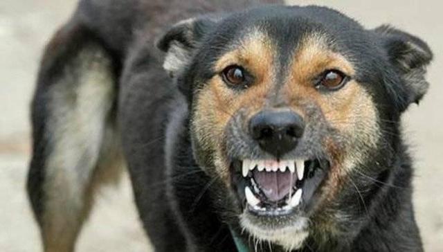 Бешенство выявили удворового пса вКрасносулинском районе
