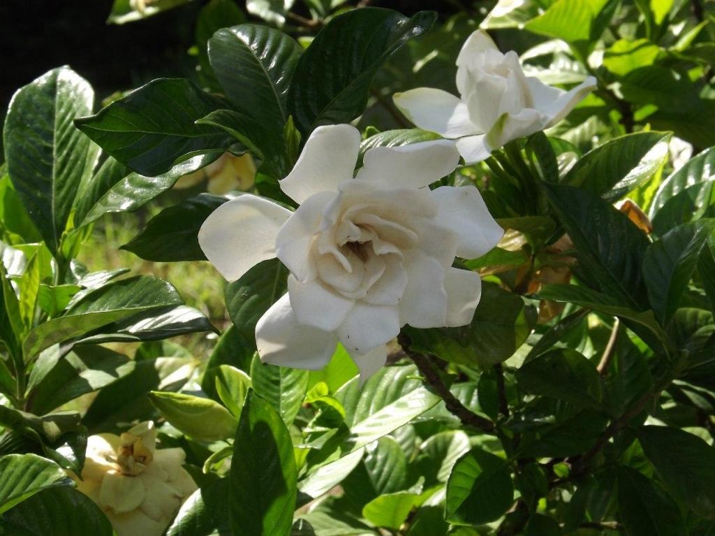 Цветы с прекрасным ароматом