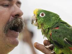 Парализованный пожарный снова научился говорить благодаря попугаям
