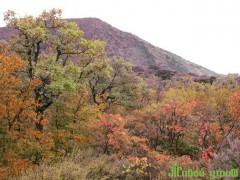 Утриш: Реликтовый лес, который не могут поделить больше года