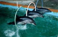 Аквапарк и дельфинарий Фото.