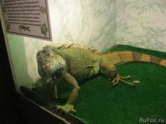 Краснодарцам показали рептилий