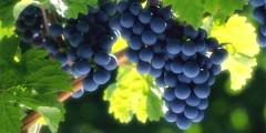 Виноделы Крыма попросили президента РФ ограничить ввоз алкоголя из Европы