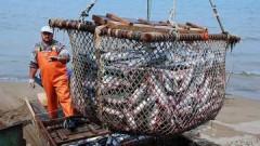 Президент РФ поручил проработать вопрос субсдирования перевозок рыбы