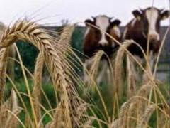 В Адыгее на поддержку сельского хозяйства в 2015 году выделят более 21,3 млн рублей
