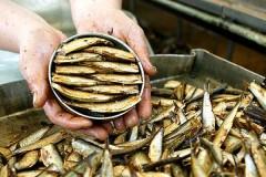 Роспотребнадзор запретил с 1 августа ввоз консервов с нескольких латвийских рыбокомбинатов