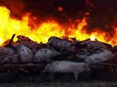 6 августа в России сожгут сотни тонн санкционных продуктов