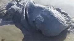 Неизвестное морское чудовище выбросило на пляж в Мексике (видео)