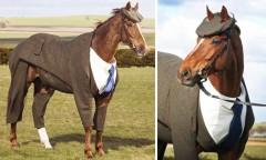 Конь в пальто: от шутки к реальности