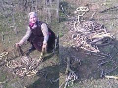 В Дагестане пенсионерка убила лопатой 80 змей