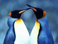 Пингвинов-геев из Берлинского зоопарка подселили к другой гомосексуальной паре