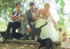 Канадская пара позвала на свадьбу 1100 кошек