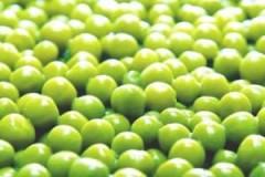 Консервные заводы Кубани выработали 1 млн банок зеленого горошка