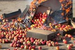 Россельхознадзор уничтожил на Дону почти 13 тонн санкционных овощей и фруктов