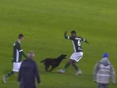 Пес атаковал футболиста во время матча