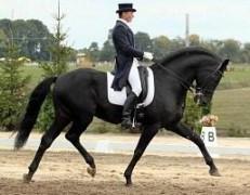 В Курганинске пройдет смотр-конкурс лошадей верховых пород