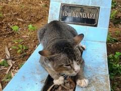 В Индонезии убитый горем кот живет на могиле умершей хозяйки больше года