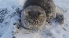 Семья из Златоуста спасла кота, вмерзшего в лед