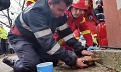Румынский пожарный сделал собаке искусственное дыхание