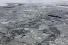 Под Саратовом по вине пьяного водителя снегохода утонули три человека