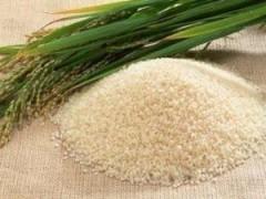 В Дагестане производство риса выросло на 23,5%