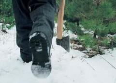В Геленджике лесник вместе с родственником напили деревьев на 22 тысячи рублей