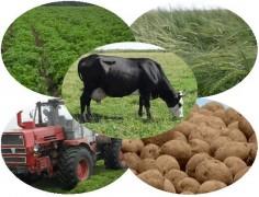 В Северной Осетии объем сельхозпроизводства за год снизился на 15%