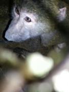 Задержанные на донской границе обезьяны и кенгуру отправлены на 30-дневный карантин