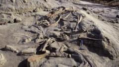 Ученые обнаружили в Новой Зеландии останки древнего гигантского пингвина