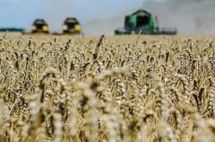 Кубань стала лидером в России по объему производства сельхозпродукции в 2016 году