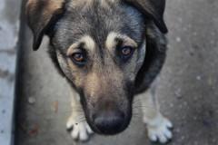 В Красноярске бездомные собаки искусали 9-летнюю девочку