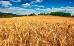 В Турции ввели пошлину на российскую пшеницу