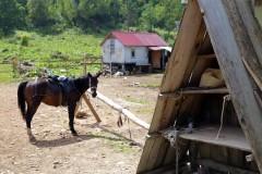 В Краснодаре в мае пройдет краевая выставка «Агротур-2017»